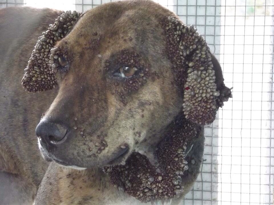 dogs in ticks out romanian league in defense of animals