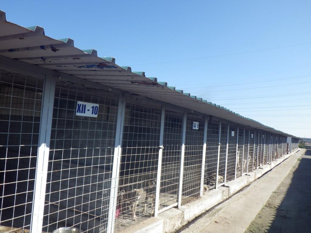 large shelter ROLDA