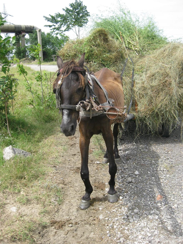 horse_injured4_1