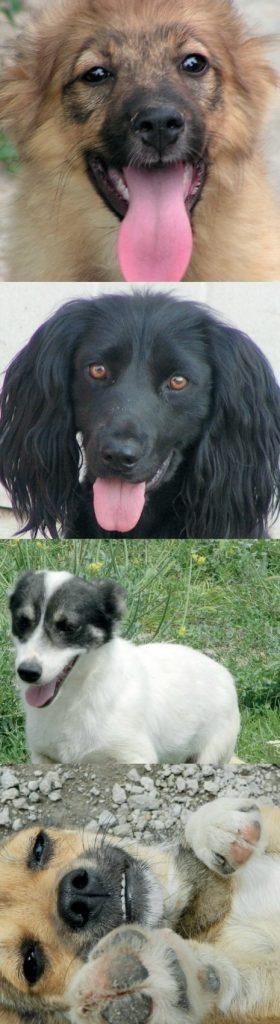 ROLDA dogs