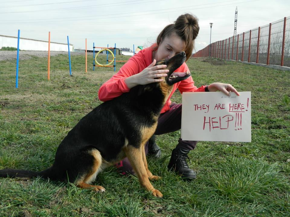Dana and dog at ROLDA shelter Romania