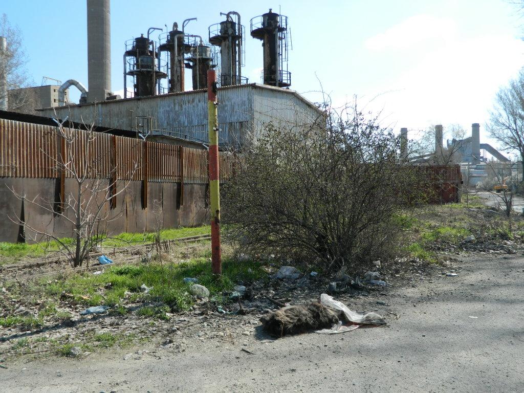 dog dead steel plant